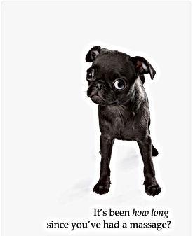 affiche chien noir massage.jpg