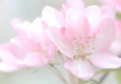 fleurs-de-bach FOND2.jpg