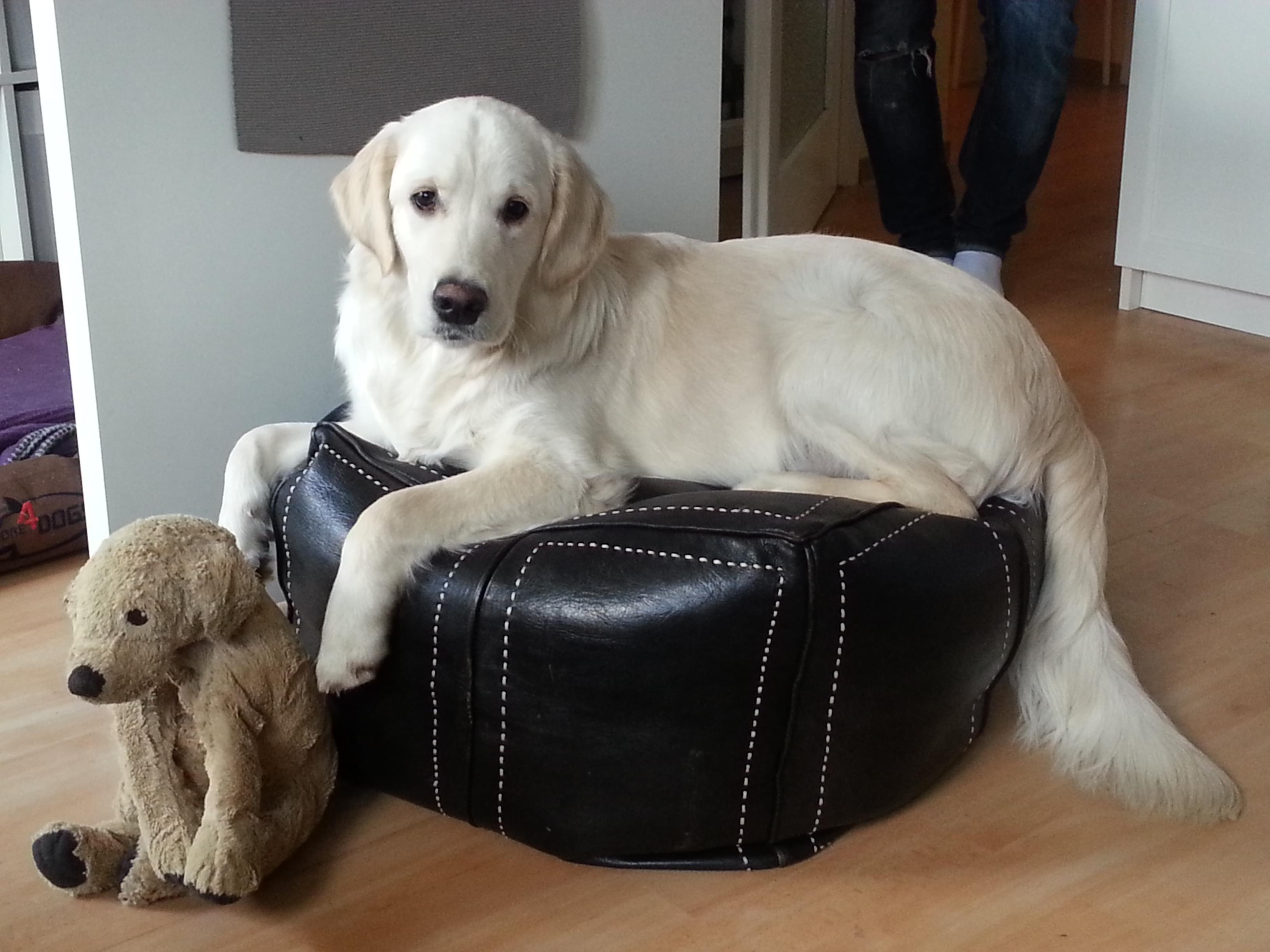 mein Puff, mein Hund & ich