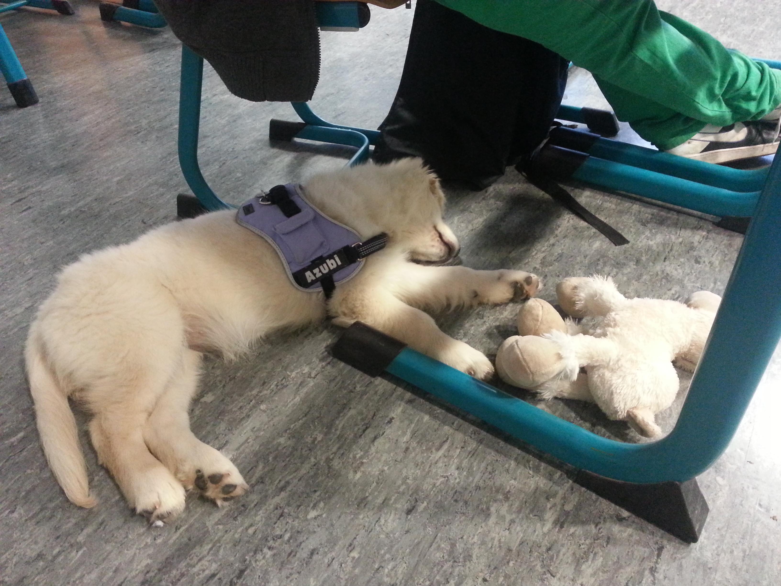 Schlafen in Englisch