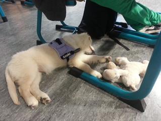 Lieblingsbeschäftigung Schlafen