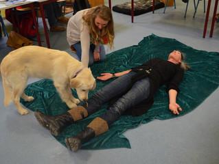 Ausbildung Schulhund - Schnauzenwelt
