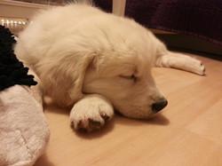 1. Mal Schlafen im neuen Zuhause