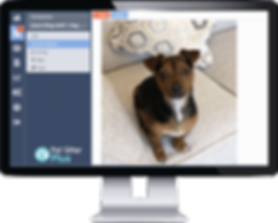 Pet Sitting Software from Pet Sitter Plus