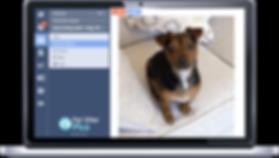 Laptop displaying Pet Sitter Plus dog walking software