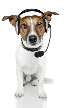 the PSP Support dog