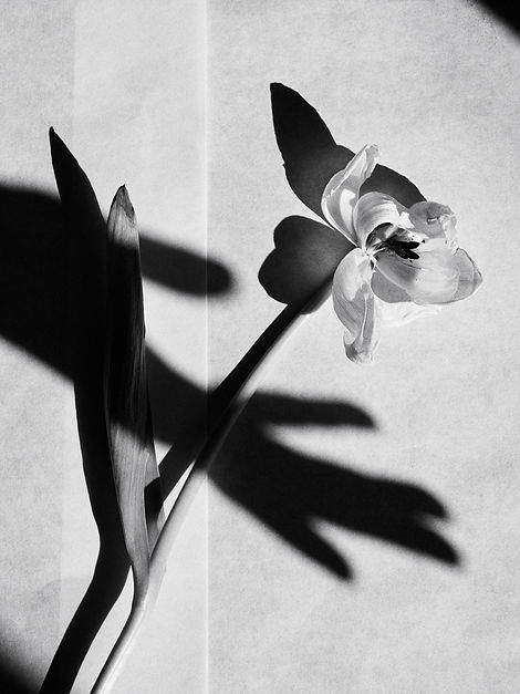 Amelie Ambroise - Still life