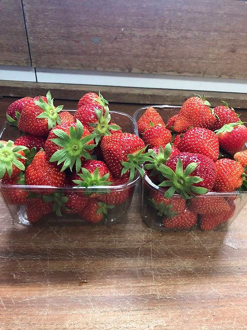 Dikke aardbeien