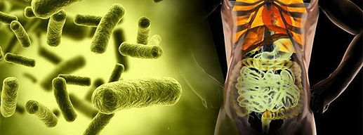 Disbiosis intestinal - InmunoNutrición