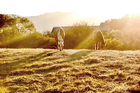 HorsesSummer.jpg
