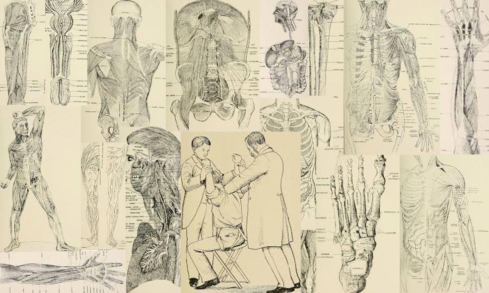 histoire-osteopathie-planches-anatomiques