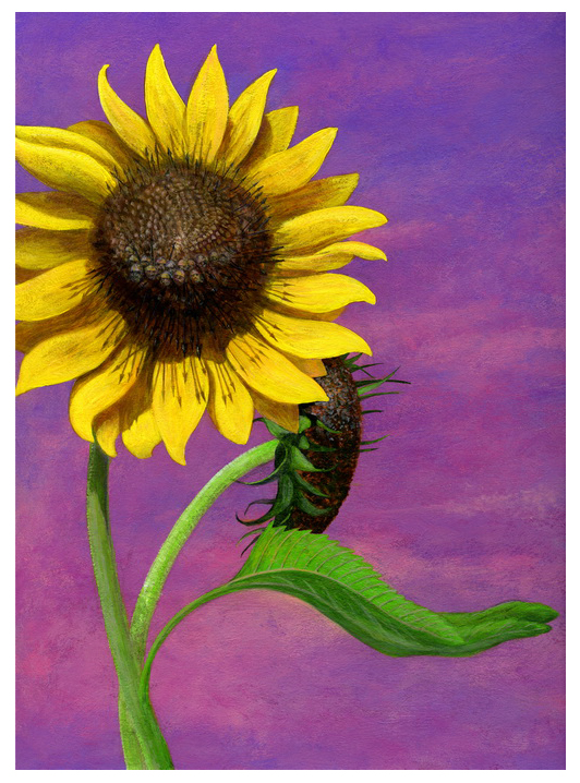 sunflower war 1