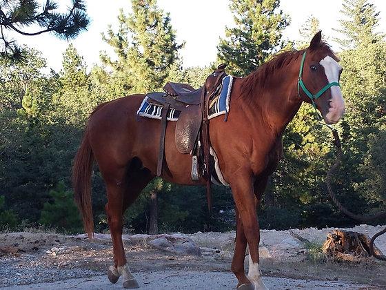 Regular 1 Hour Horseback Ride