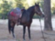 20150807_190943.Ranger.jpg