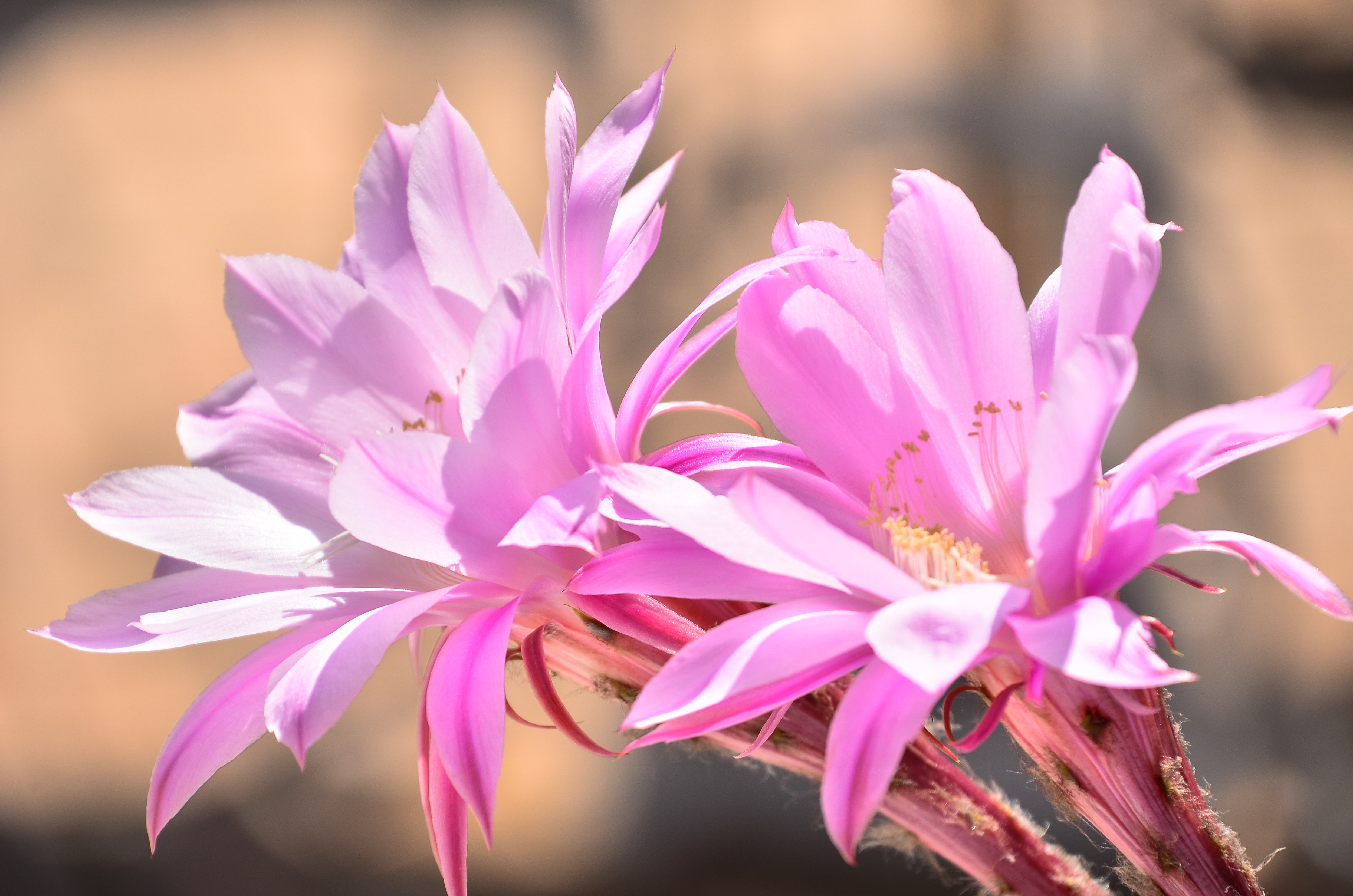 i fiori del nostro giardino