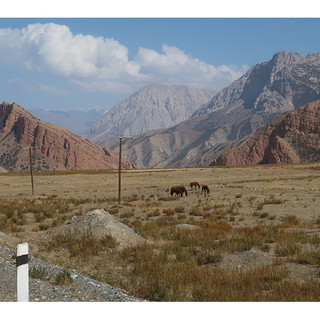 The Wild and Gorgeous Horses of the Mountains
