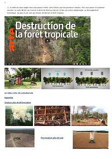 6 Forêt.jpg