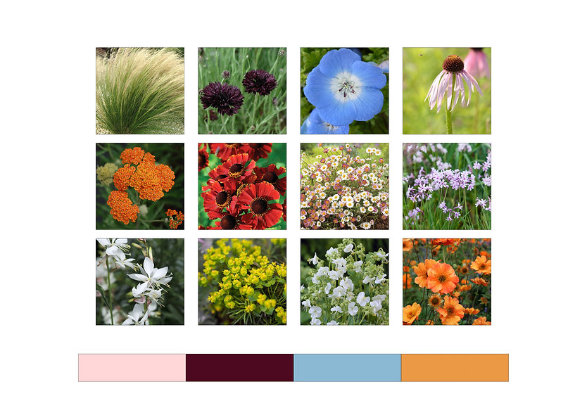 PlantBoard_HamptonCourt.jpg