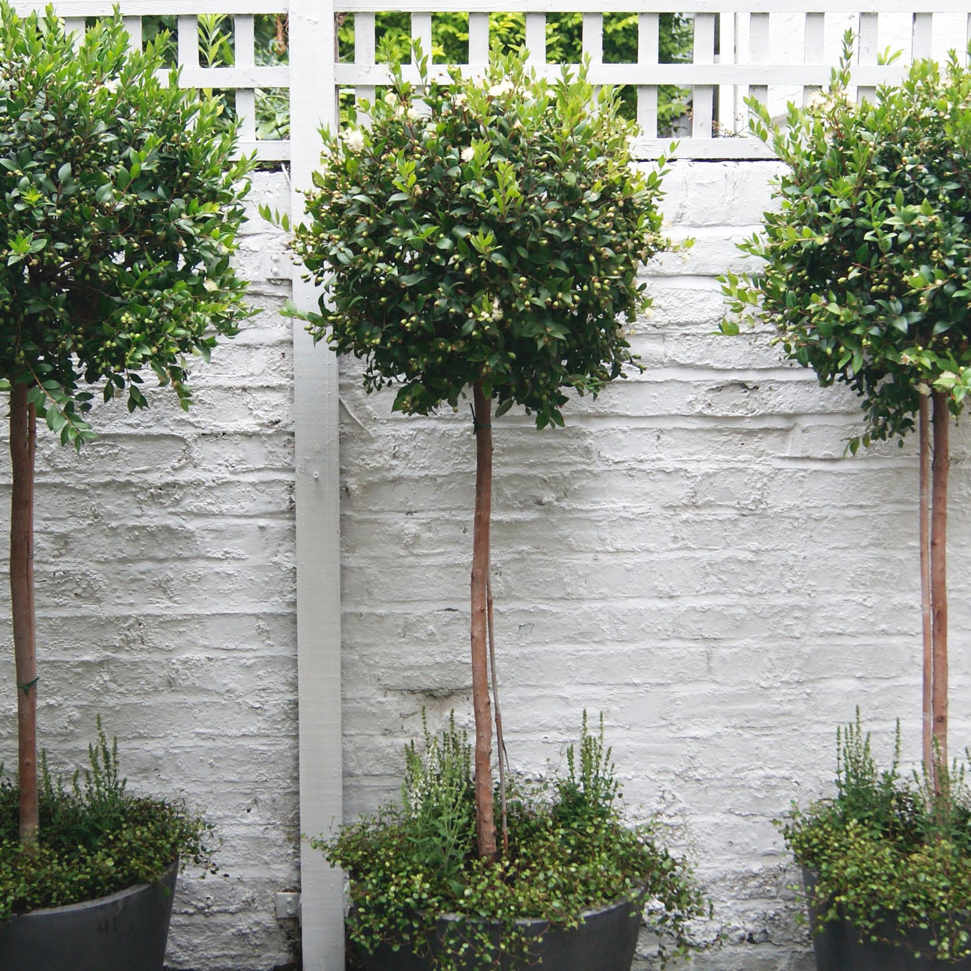 Formal Tree Planters