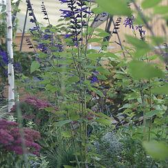 Garden Design Chingford.jpg