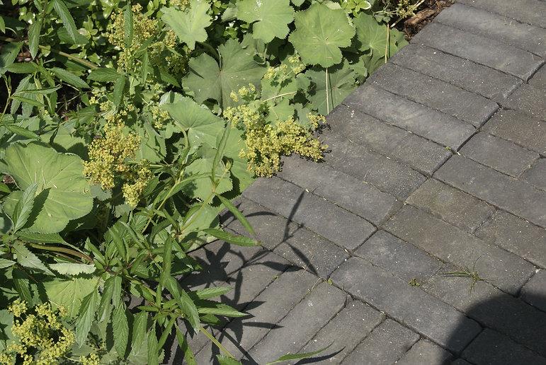 Garden Design Walthamstow