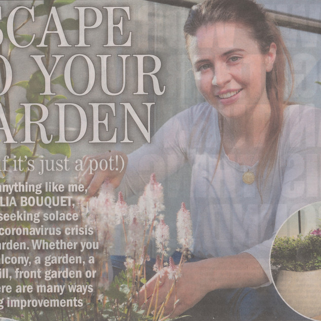 Sunday Express Gardening Article