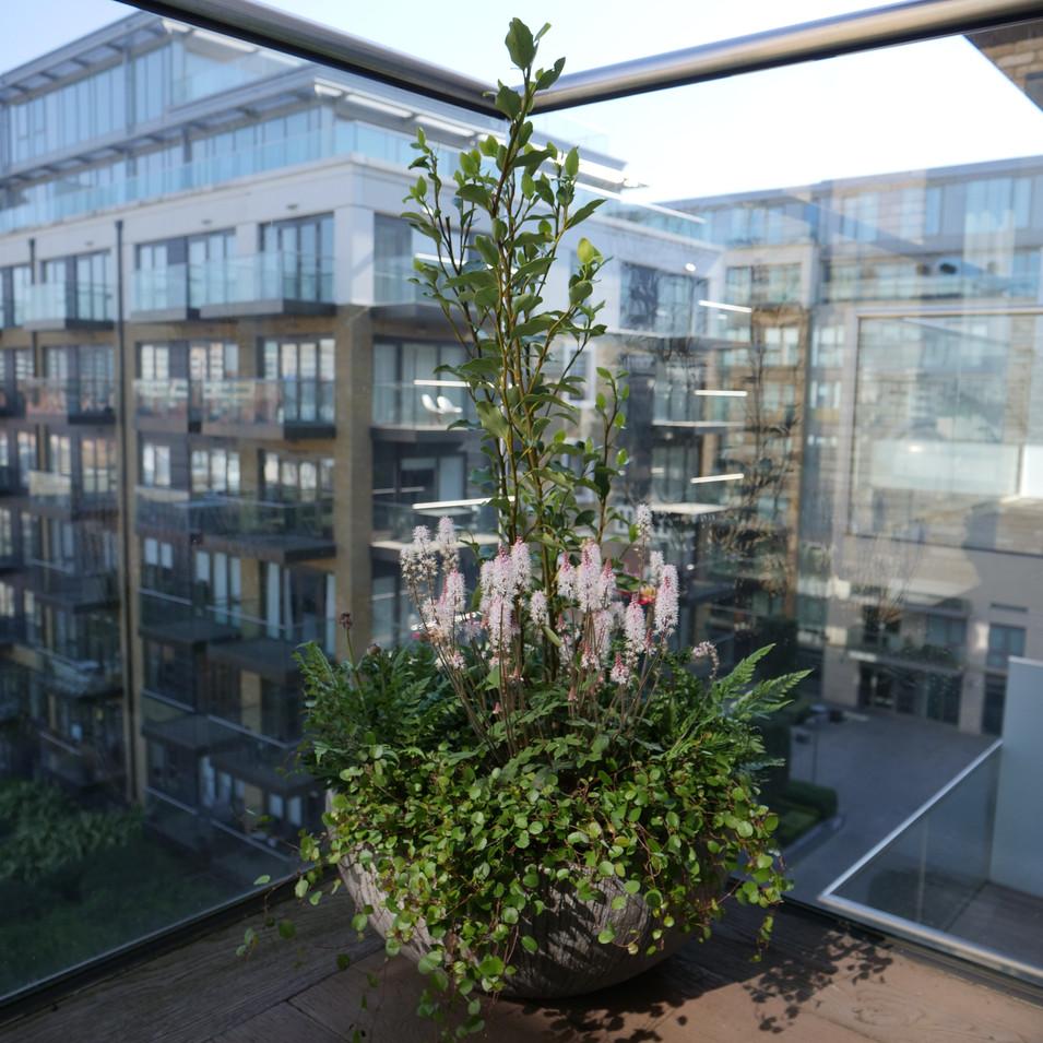 Pots & Planter Design