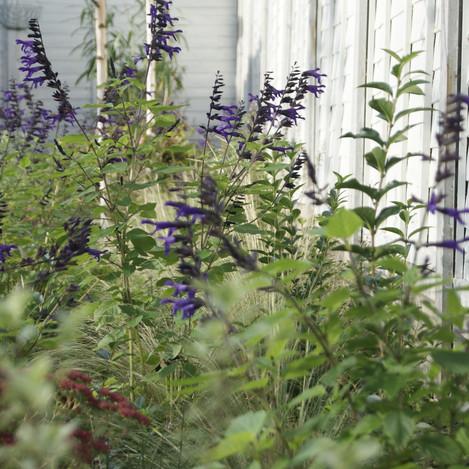 Family garden in Chingford
