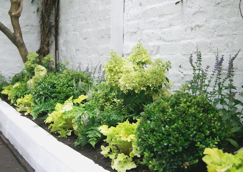 Garden Design Pimlico