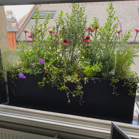 Window Boxes in Notting Hill