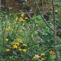 Amelia Bouquet Garden Design