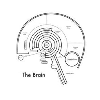 Brain Map Print
