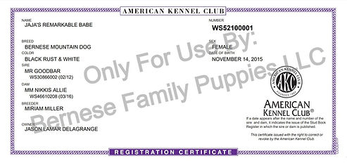 AKC Registered Bernese Mountain Dog