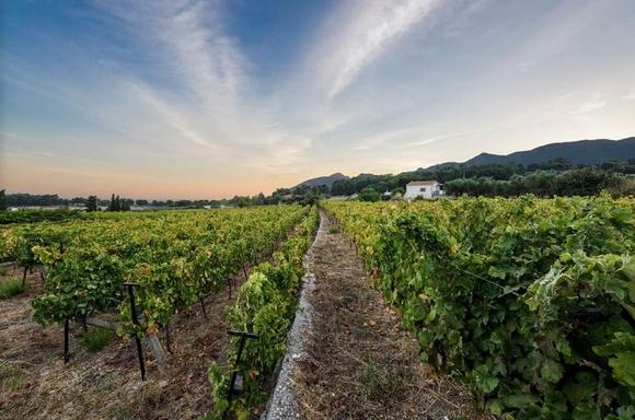 De wijnproeferij van Vakakis