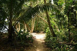 Path in Tortuguero, Costa Rica.jpg