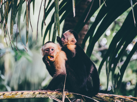Bali- deel 2: 'Monkey don't pee on me!'