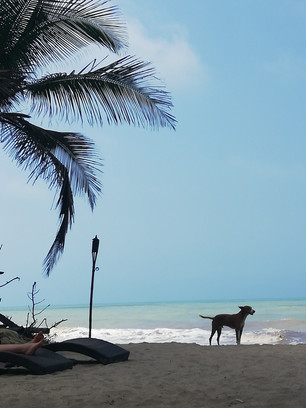 Hondjes op Palomino strand