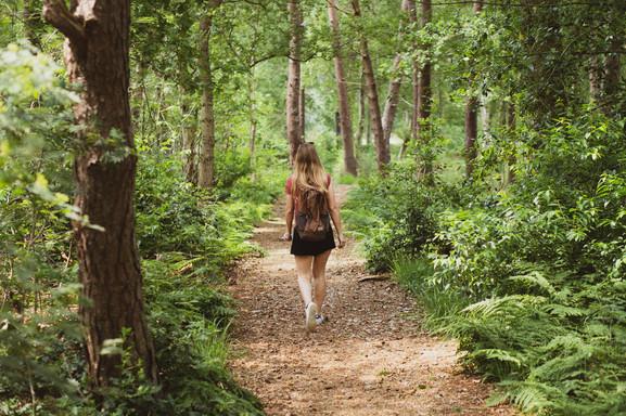 Wandelroutes in de omgeving