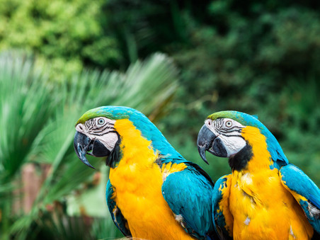 Costa Rica 2.0- deel 2: 'Ara Love'