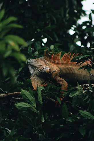 Tortuguero,_Limón_Province,_Costa_Rica