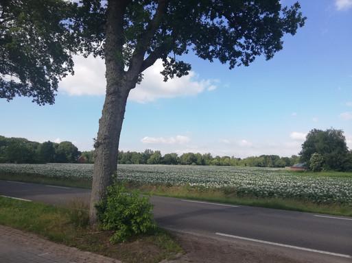 Het uitzicht aan de voorkant van de boerderij.