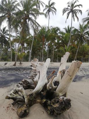 Palomino strandwandeling