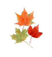 kisspng_autumn_leave_aqPYR.png