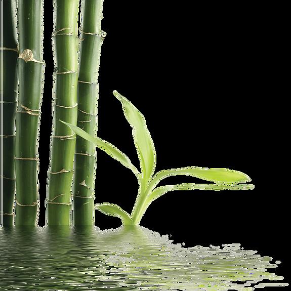 kisspng_bamboo_green_j4uoo.png