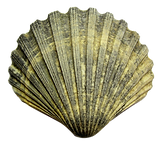 kisspng-seashell-cockle-sea-shell-5a736b