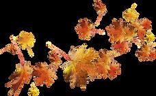 kisspng_autumn_leave_k8lbC.png
