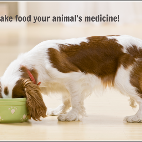 MAKE FOOD YOUR PET'S MEDICINE!