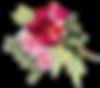 Logo Femmes Sauvages I Alice Richard