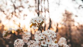 10 stunning blossom hikes in Belgium