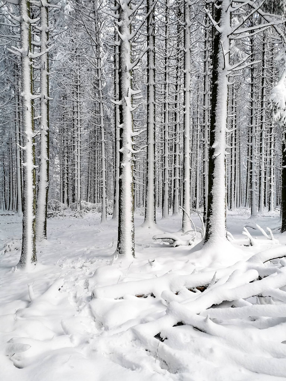 Snow hikes in the Belgian Ardennes